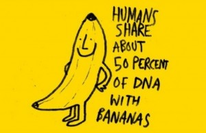 The first axiom of human bananology